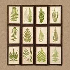 Collection of 19th century ferns in Italian wood frames for sale Christopher Hall Antiques London