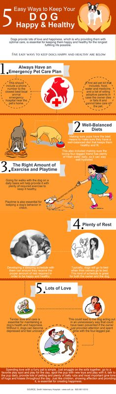 Here is presented the info that will help you to keep your dog healthy.
