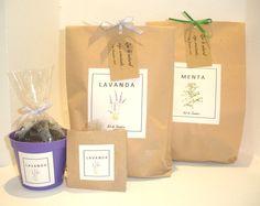 Kit de siembra aromático, con semillas de lavanda/menta maceta de color y sobre con semillas