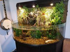 NOT MINE, but a friend! Check out his axolotl! Reptile House, Reptile Room, Reptile Cage, Reptile Enclosure, Axolotl Pet, Axolotl Care, Terrarium Reptile, Terrariums, Terrarium Ideas