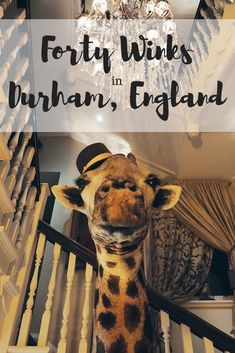 Forty Winks in Durham: the most unique guesthouse in North East England. See inside this treasure trove of weird and wonderful artefacts and bookmark this unusual hotel for your Durham trip. Hotel S, Unusual Hotels, North East England, Destinations, Backpacking Tips, Weird And Wonderful, Trip Planning, Travel Inspiration
