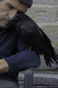 Deep wisdom, Wise-men, Raven lore, Ornithomancy, profound companionship.  (Lon & Lino - photo by Laetitia)