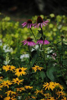 Hidcote Manor Gardens | by Mark Wordy