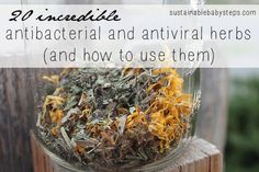 20 Antibacterial and Antiviral Herbs and how to use them.