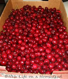 Cherry Picking: Preserving Cherries, PLUS How To Use Cherry Pits! Late July/early Aug is cherry season in N. Canning Recipes, Canning 101, Jam Recipes, Veggie Recipes, Freezing Fruit, Fruit Nutrition, Cherry Picking, Bountiful Baskets, Cherry Season