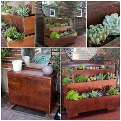 Vintage Succulent dresser
