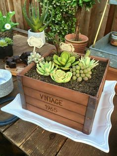 Succulent box sculpted cake