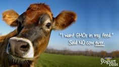 This is Getting Ridiculous: GMO Grass about to be Approved (Kiss Our Grass Fed Beef Goodbye?) ....... {expletive}
