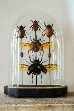 On FLEEK / Work the bugs into your boho home decor - bell jar Curiosity Cabinet, Cabinet Of Curiosities, The Bell Jar, Bell Jars, Deco Originale, Insect Art, Glass Domes, Natural History, Decoration
