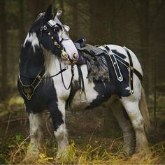 Peter, an amiable pinto Irish Cobb, costumed as a medieval war horse. Most Beautiful Horses, All The Pretty Horses, Animals Beautiful, Cute Animals, Horse Armor, Horse Gear, Horse Tack, Bride Cheval, Friesian Horse