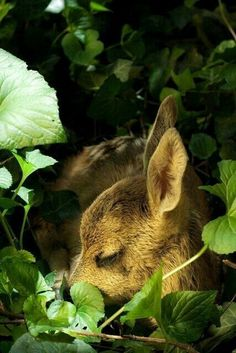 .time to take a nap, deer....