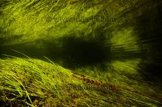 Fine art photography by Ivan Mikolji