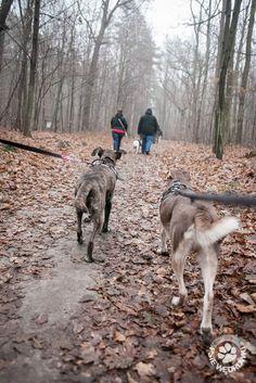 15 km dla Amstaffów Animals, Animales, Animaux, Animal, Animais