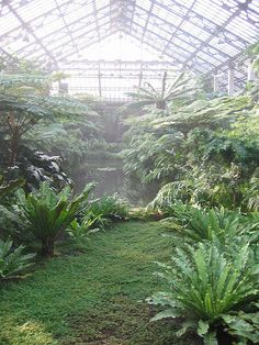 fern room. waterfall designed then redesigned then redesigned and so forth by Jens Jensen (he had to get the sound just right). Garfield Park Conservatory, Chicago