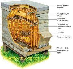 Блог пчеловода для любителей мёда. Пчеловодство для начинающих и не только!: О стандартах рамок