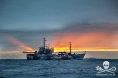 The MV Bob Barker patrols the Southern Ocean Whale Sanctuary in a rainbow sunrise.     #SeaShepherd #Antarctica