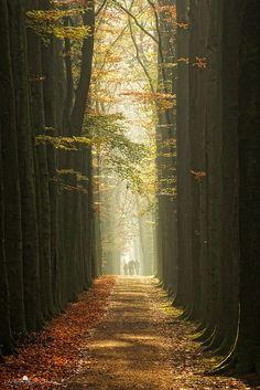 New Wonderful Photos: Lage Vuursche, The Netherlands