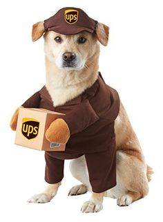 6d9d40a61 37 Creative Halloween Costumes for Pets