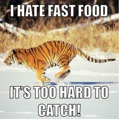 76 Best Etc Images Tiger Balm Tigers Journals