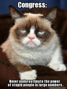 Do you love Grumpy cat. If you do, These Grumpy cat Memes work for you.These Grumpy cat Memes work are so funny and humor. Grumpy Cat Quotes, Funny Grumpy Cat Memes, Funny Animal Memes, Funny Animal Pictures, Funny Cats, Funny Animals, Funny Memes, Funny Sarcastic, Funny Quotes