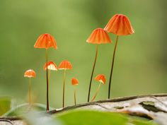 Mushrooms in the Amazon forest by Valdir Hobus on 500px