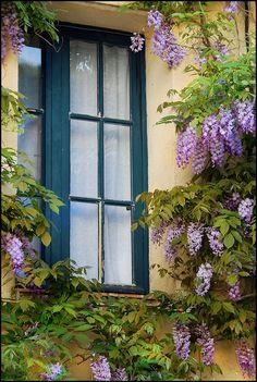 La fenetre et sa glycine by Christine Triadou, via Flickr