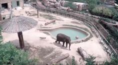 Free Lucky…kill Lucky? Endangered elephant's life hangs in balance as animal group sues zoo  http://pronewsonline.com/ponews-blog  © San Antonio Zoo