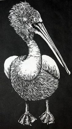 Pelican Linocut by Rowanne Anderson http://www.rowanneanderson.com/ Tags: Linocut, Cut, Print, Linoleum, Lino, Carving, Block, Woodcut, Helen Elstone, Birds
