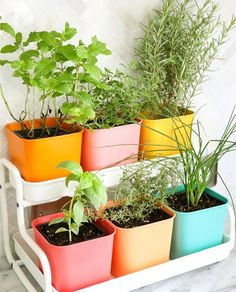Herb garden goals!!  Will herbs grow in a kitchen with pretty much no natural light?? Any tips!? Kel x⠀   @abeautifulmess