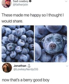 Memes of dogs of the day 32 photos - - Lovely . - Memes of dogs of the day 32 photos – – Lovely Animals World - Funny Animal Jokes, Funny Animal Pictures, Cute Funny Animals, Funny Cute, Funny Dogs, Hilarious, Funniest Animals, Cute Puppies, Cute Dogs