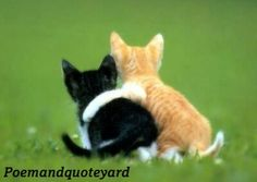 Ten Great Cat Breeds for Kids Animals And Pets, Funny Animals, Cute Animals, Bro, Fake Friend Quotes, Animal Hugs, Cat Plants, Friendship Poems, Owning A Cat