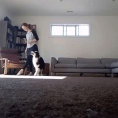 GIF The dog fights all the moves for his mistress