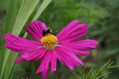Kukka ja mehiläinen.