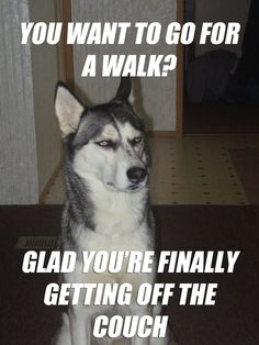 Dog Memes and Funny Humor Pictures clean Funny Animal Pictures, Dog Pictures, Funny Animals, Cute Animals, Stupid Animals, Animal Funnies, Animal Pics, Animal Memes, Funny Dog Memes