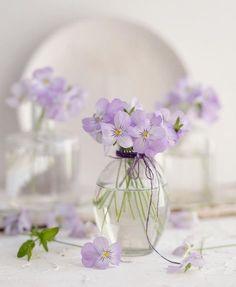 Raindrops and Roses Deco Floral, Arte Floral, Beautiful Flower Arrangements, Floral Arrangements, Raindrops And Roses, Flower Wallpaper, Flower Photos, Pansies, Spring Flowers