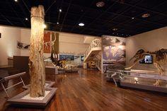 2008 밀양시립박물관 [화석전시관]