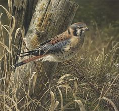 "Stunning Wildlife Paintings by Denis Mayer Jr.   Vancouver, Canada.                                   ""Patience is rewarding"""
