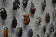 A patron found a tiny VW Beetle mixed in with the other beetles in the insect collection at the Cleveland Museum of Natural History and shared the image on reddit. Some commenters on the reddit post have mentioned that they have seen similar jokes in other museums as well. ♠ re-pinned by http://www.wfpblogs.com/category/toms-blog/