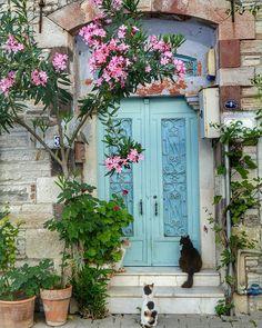 Blue door - Two cats wait patiently to enter in Izmir, Turkey.