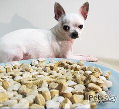 Galletas para perro recompensa con potitos de bebé