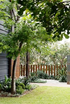 All Seasons, Clovelly - Secret Gardens Landscape Architecture Landscape Architecture, Landscape Design, Garden Design, Fence Landscaping, Landscaping With Rocks, Melbourne, Tropical Garden, Garden Beds, Garden Path