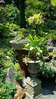 vertical accents in the garden