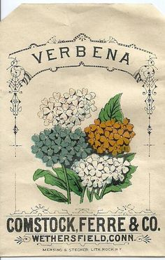vintage seed packet - verbena                                                                                                                                                                                 More