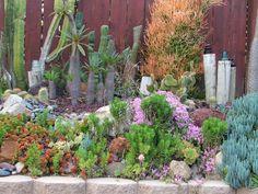 Drought tolerant succulents and cactus.