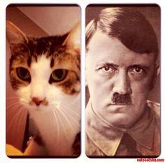 My Cat Kitler. - http://cutecatshq.com/cats/my-cat-kitler/