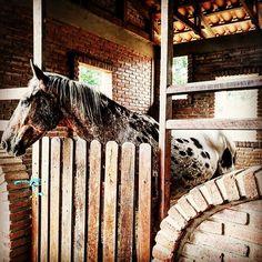 Bolivia #boliviantours Bolivia, Tours, Horses, Amazing, Animals, Animales, Animaux, Horse, Animal Memes