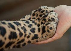 Shake hands ;)