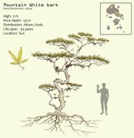 Mountain white bark by Hyrotrioskjan