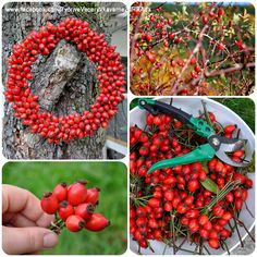 Jesenné vence Winter Christmas, Christmas Crafts, Autumn Crafts, Diy Home Crafts, Red Berries, Autumn Inspiration, Hobbies And Crafts, Holiday Parties, Flower Designs