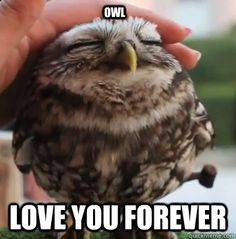 Make yourself smile and brighten up your day with these totally adorable cute love memes you won't be able to resist. Cute Memes For Her, Love Memes Funny, Romantic Memes For Him, Love Notes For Her, Love You Meme, I Love You Pictures, Good Morning My Love, Owl Pet, Harry Potter Universal